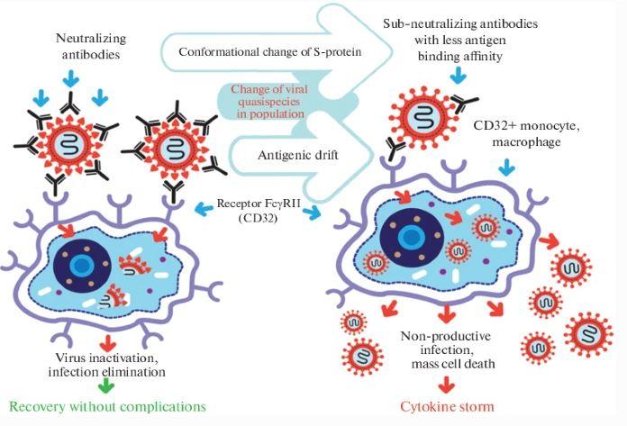 Antibody Dependent Enhancemnt